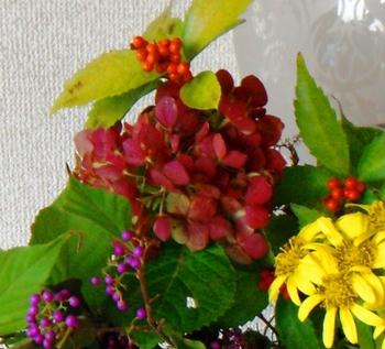 121125枯れ紫陽花.JPG